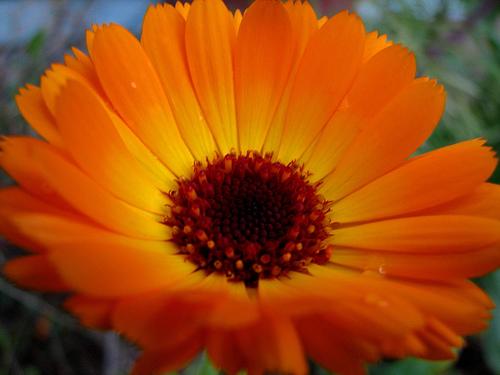 Photo: Flickr.com