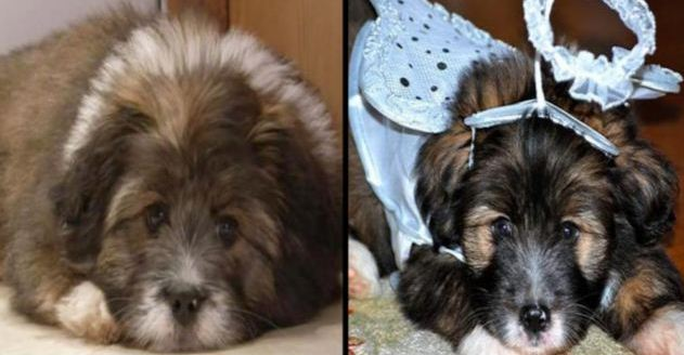 cloned-dog