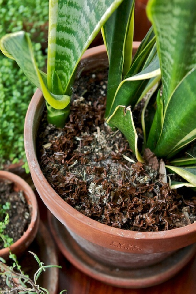 Indoor plant care during the winter