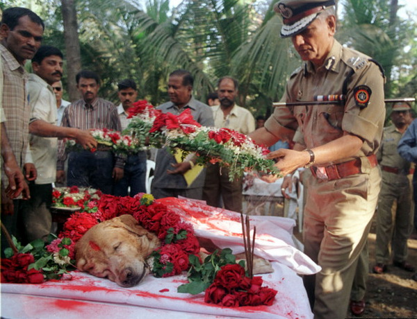 A senior police officer lays a floral wreath on Bombay's most famous dog 'Zanjeer' who worked with t..