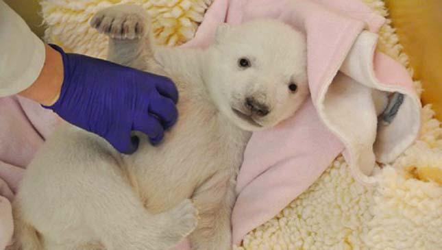 polar-cub3