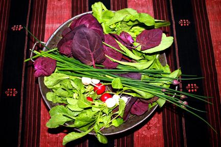 salad-recipe2
