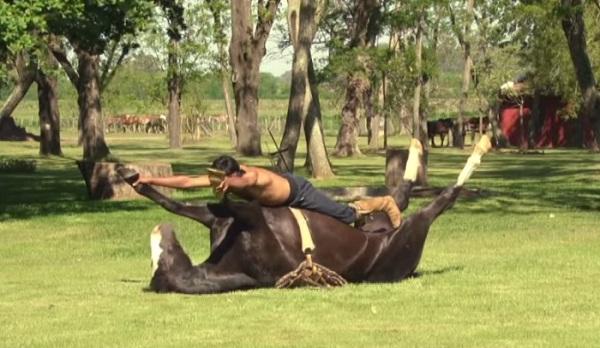 horse-yoga