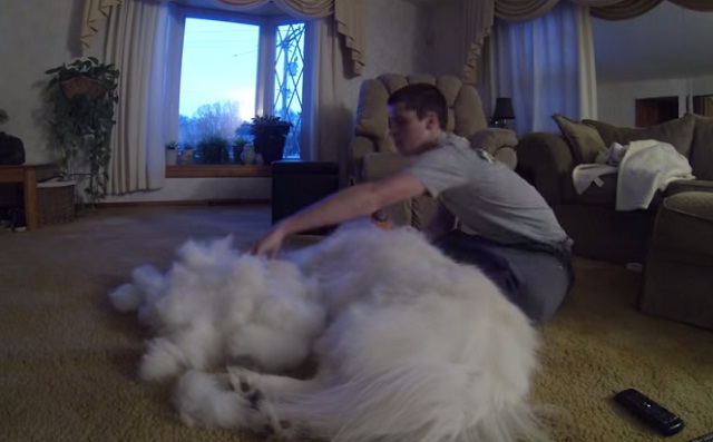 comb-the-hair-of-his-dog.jpg
