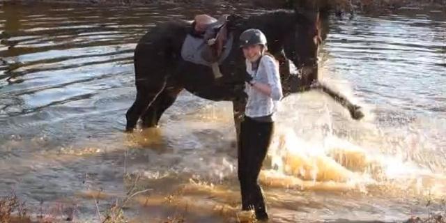horse-water.jpg