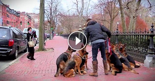 dog-trainer.jpg