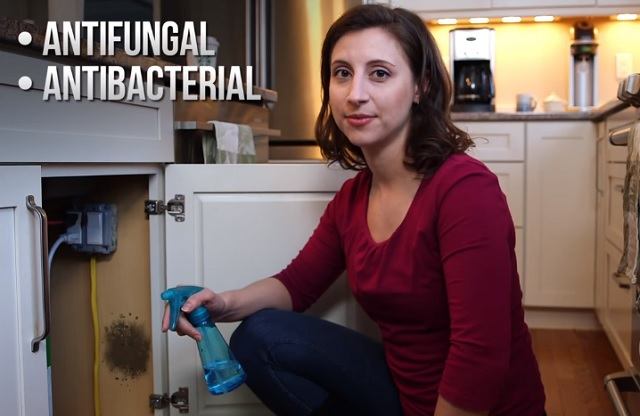 A very efficient agent for mold removal found in most households