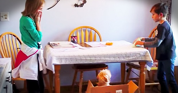 These parents decided to surprise their children. How? Wait to see what's inside the box!