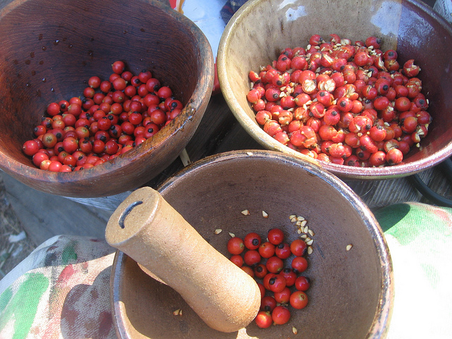 Rose hips, one of the most valuable fruits in the world