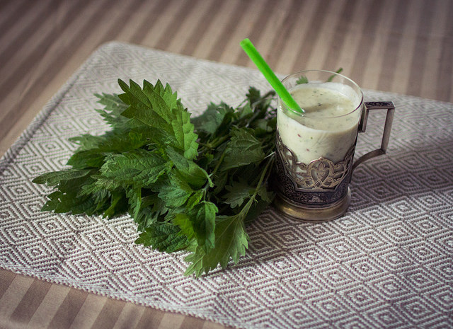 Discover nettle, the champion of medicinal plants