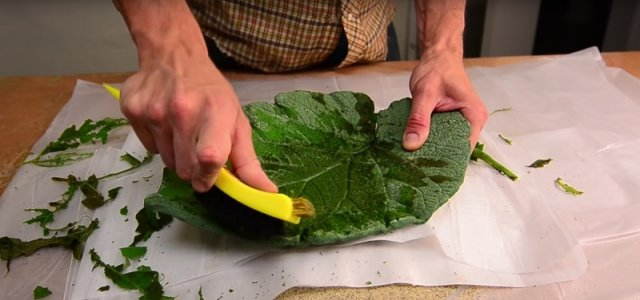 Find the largest leaf you can, and use it to make a beautiful platter