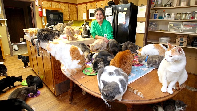 This woman lives with 1100 cats. Take a look at the cat sanctuary she established