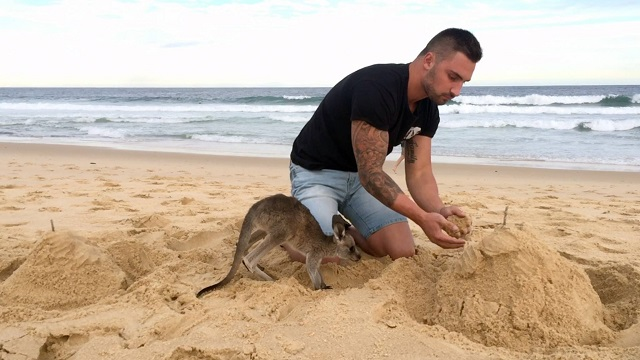 Men adopted a baby kangaroo, now they are best friends