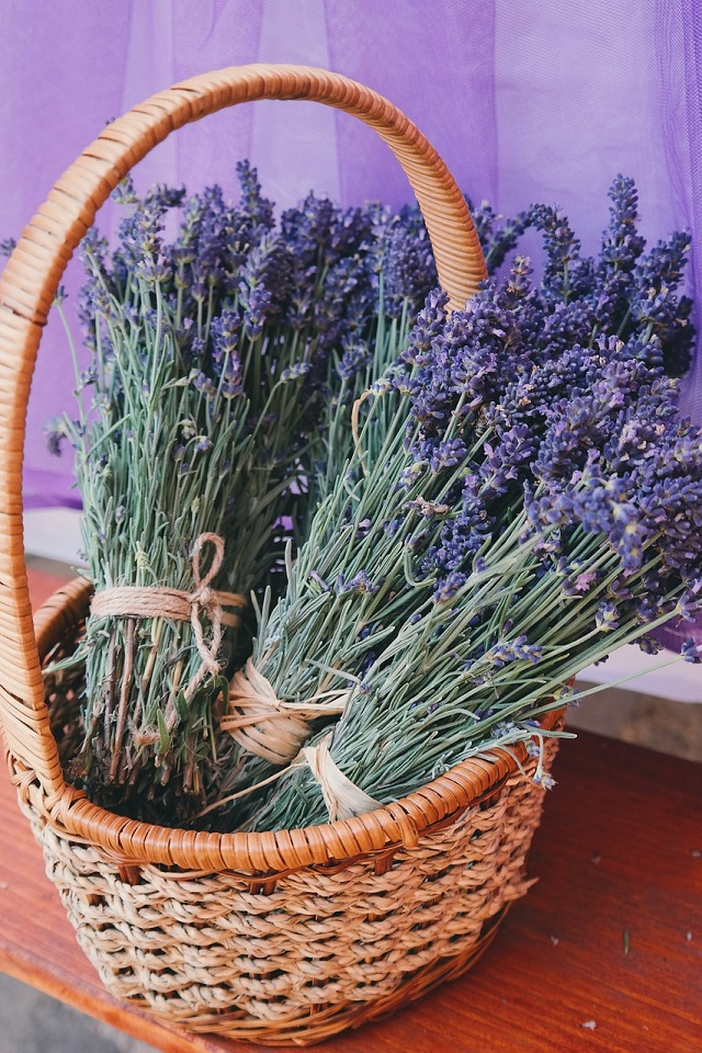 The miraculous effects of lavender essential oil