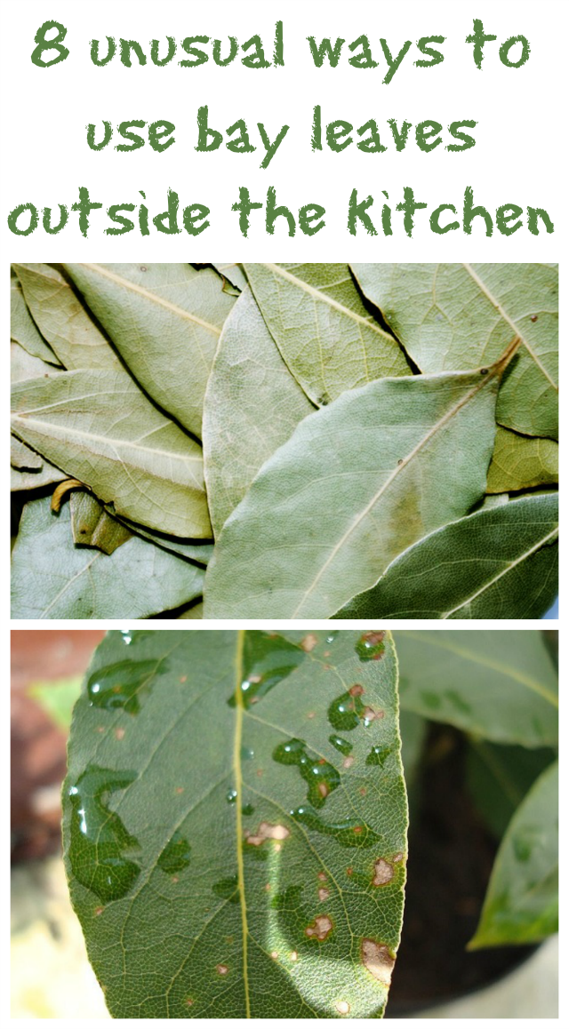 8 unusual ways to use bay leaves outside the kitchen