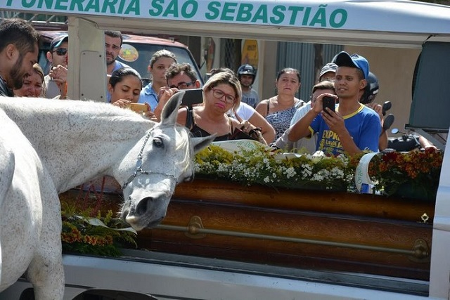 It's not only people who cry - the reaction of a horse at his master's funeral