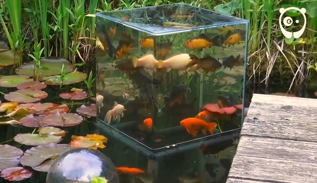 Tips for a really special garden pond with a built-in aquarium