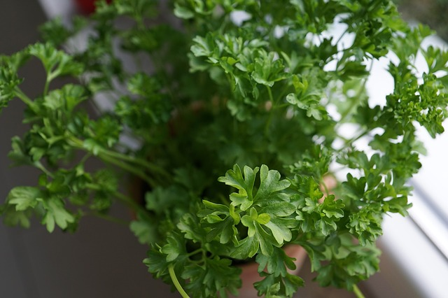 A fragrant vegetable that protects from anemia, inhibits cancer and soothes pain