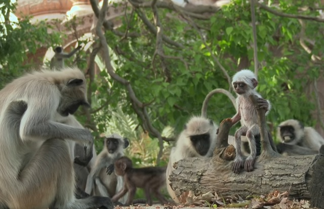 An intruder was placed in the middle of a group of primates. What happened amazed the researchers