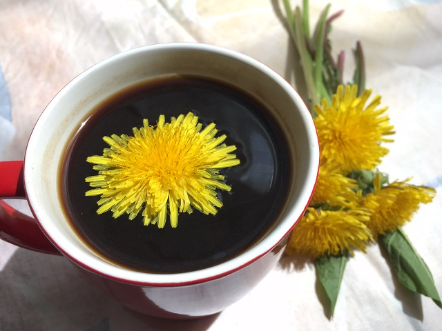 How to make dandelion coffee, an excellent cleanser for the liver and the blood