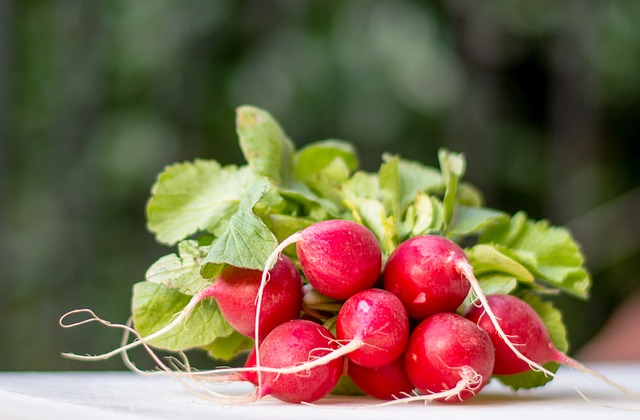 Red radishes for the urinary system - recipe and benefits