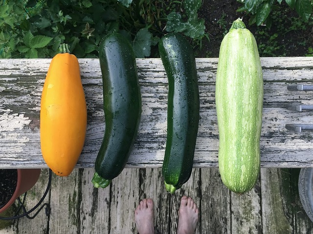 The benefits of zucchini – full of vitamins and perfect in a diet