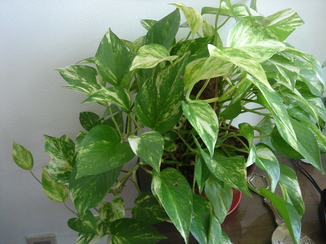 The best air purifying plants for your room