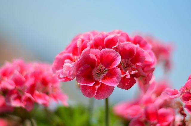flower-2421286_640.jpg
