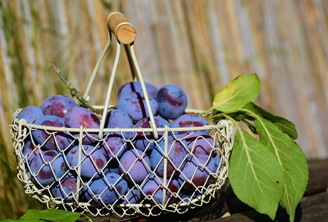 Use plums to say goodbye to constipation