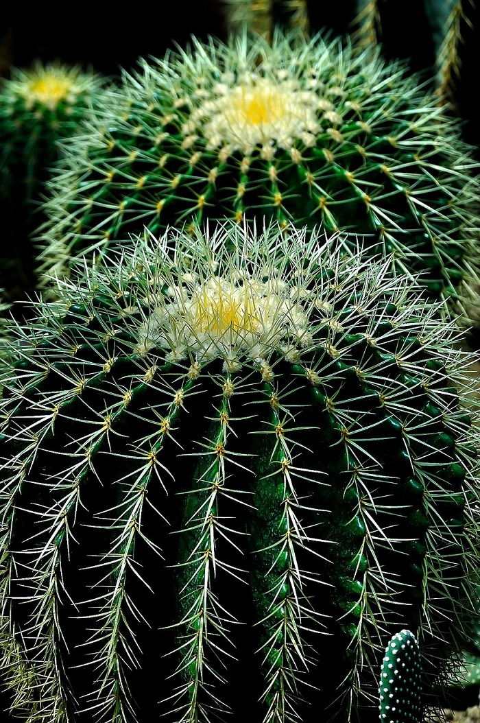 Things you didn't know about your cactus - learn more and get tips for their care