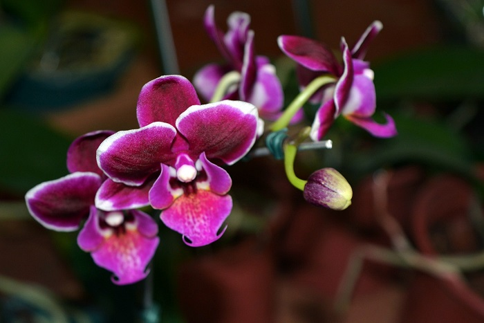 How to water orchids in winter so that they don't get cold and start flowering as soon as possible?