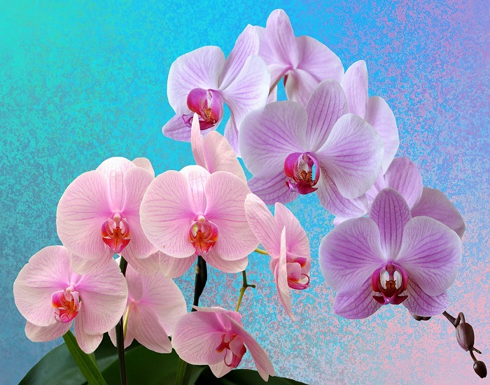 Useful tips for orchid lovers