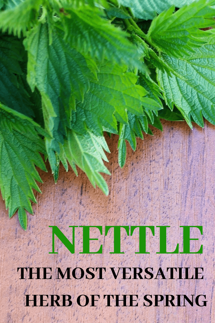 The benefits of nettle, the most versatile herb of the spring
