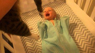 baby-loves-cat.jpg