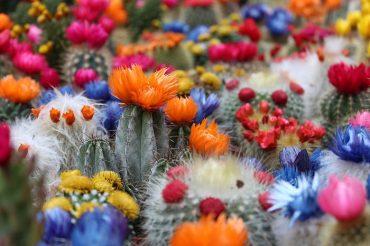 cactus-2721269_1280.jpg