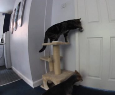 cat-video.jpg