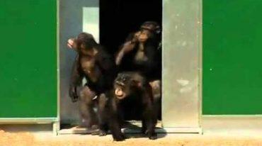 chimps-sun.jpg