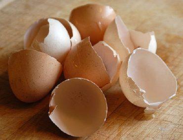 eggshells.jpg