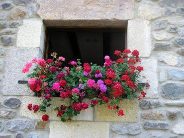 flowers-972915_640.jpg