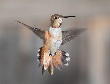 hummingbird-1538748_640.jpg
