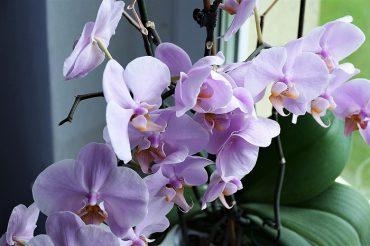 orchid-2667984_1280.jpg