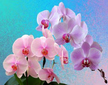 orchids-2710590_1280.jpg