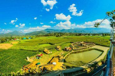 rice-fields2.jpeg