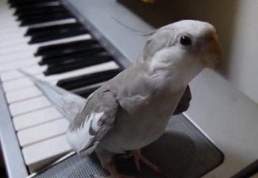 singing-parrot.jpg