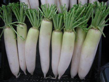 white-radish.jpg